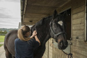 Equine Palpation of musculature