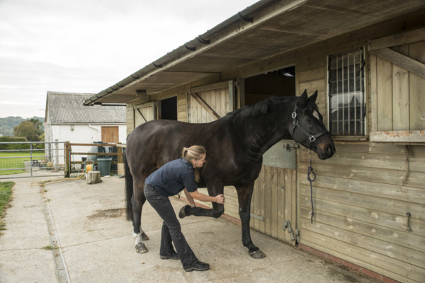 Equine Forelimb retraction stretch