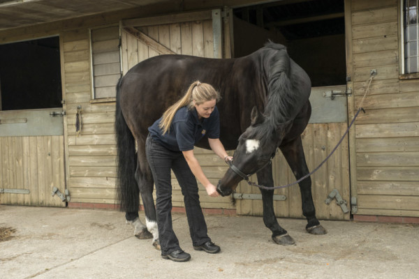 Equine Lateral neck stretch
