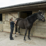 Equine TENS electrotherapy treatment