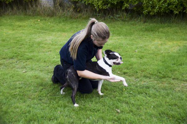 Canine assessment